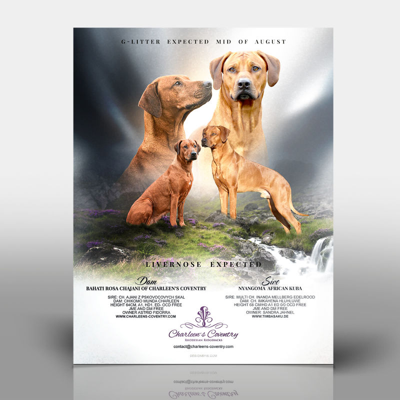 Breeder web &graphic design
