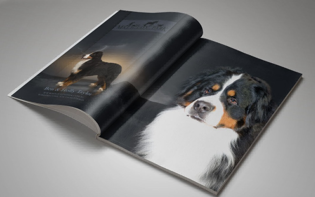 Dog magazine ads design